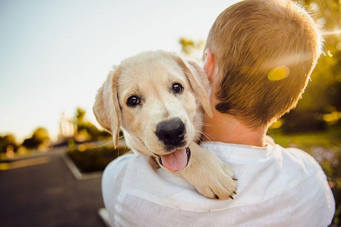 Pies czyli najlepszy przyjaciel człowieka. Jak o niego dbać