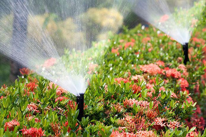 Jak stworzyć automatyczne nawadnianie ogrodu