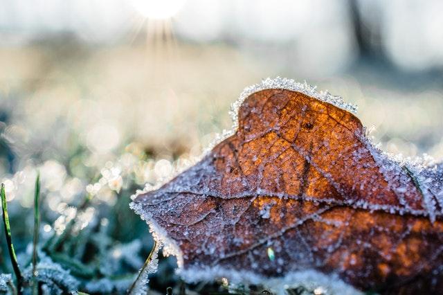 Jak przygotować ogród do zimy