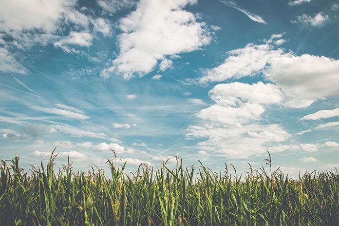 Jak poprawić plony przy uprawach rolniczych